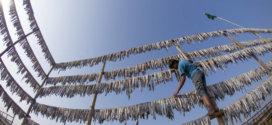 Le Directeur général de la FAO salue un traité historique visant à mettre fin à la pêche illégale