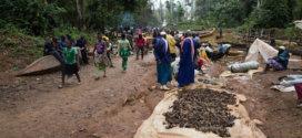 Pêche miraculeuse à Lom Pangar, en amont du nouveau barrage camerounais