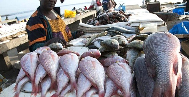 Pêche illégale : SkyLight offre son expertise au Gabon