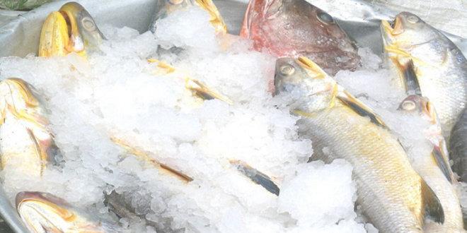 Lutte contre la vie chère : Le prix du kilogramme de poisson revu à la baisse