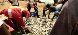 420 millions pour améliorer la production de la pêche au Cameroun
