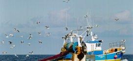 Pêche et aquaculture : Forte incidence des changements climatiques sur les espèces aquatiques
